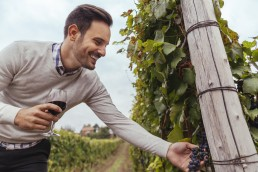 Smiling man in a vineyard checking grapes