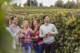 Happy friends in a vineyard